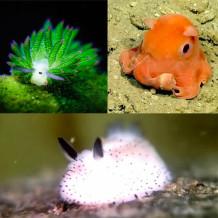 The Cutest Creatures Under the Sea!